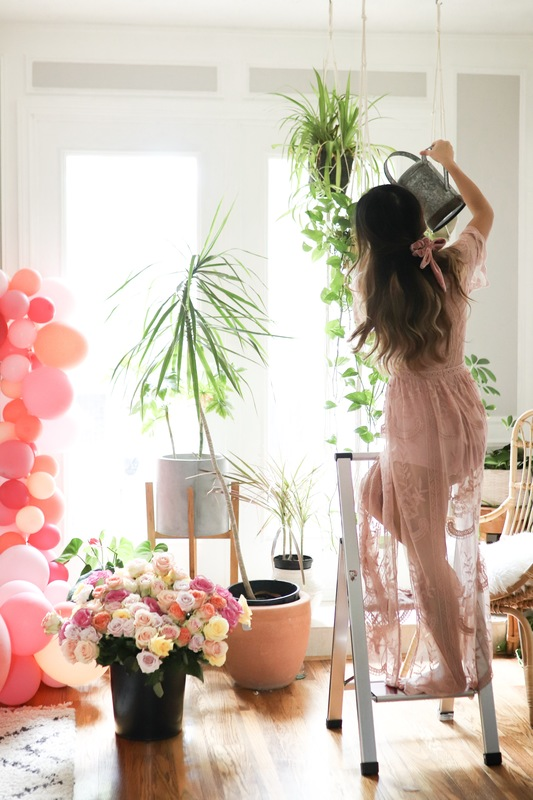 5 purifying house plants to detox your space and the best clean shampoo and conditioner of 2019