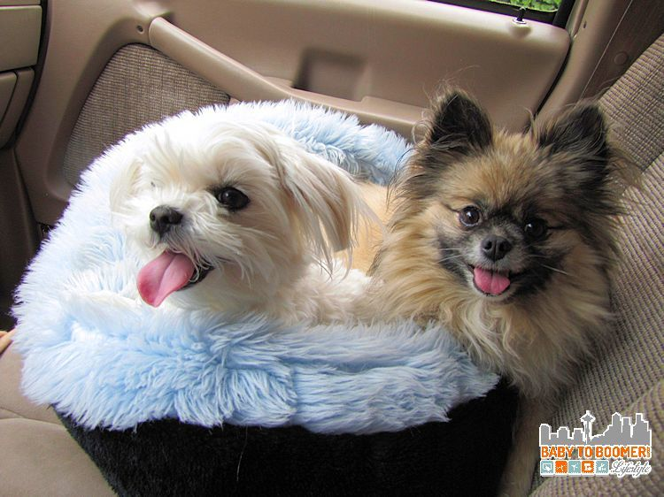 My Small Dogs - Gracie & Jewel Must Haves for Dogs - Big or Small #BBNshops #ad