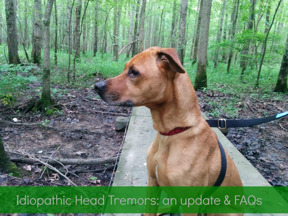Idiopathic Head Tremors FAQs And An Update