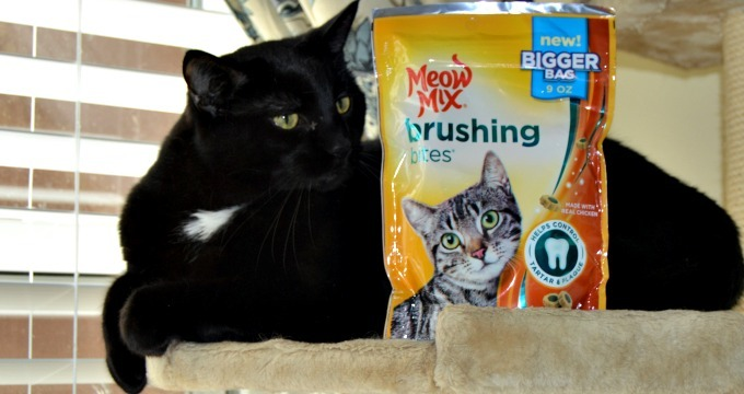 Meow Mix Dental Treats From Walmart