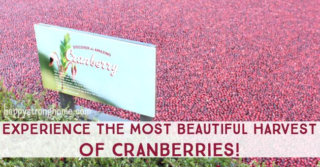 Harvest Cranberry Classroom