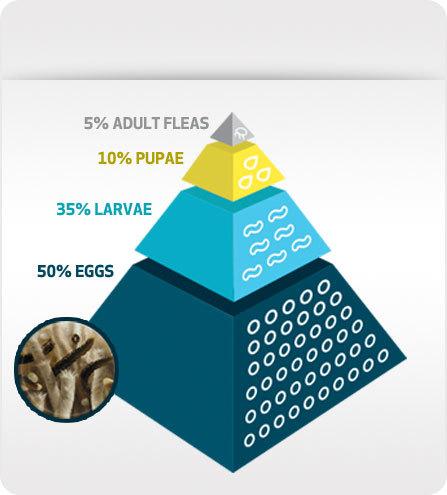 Flea Developement Pyramid
