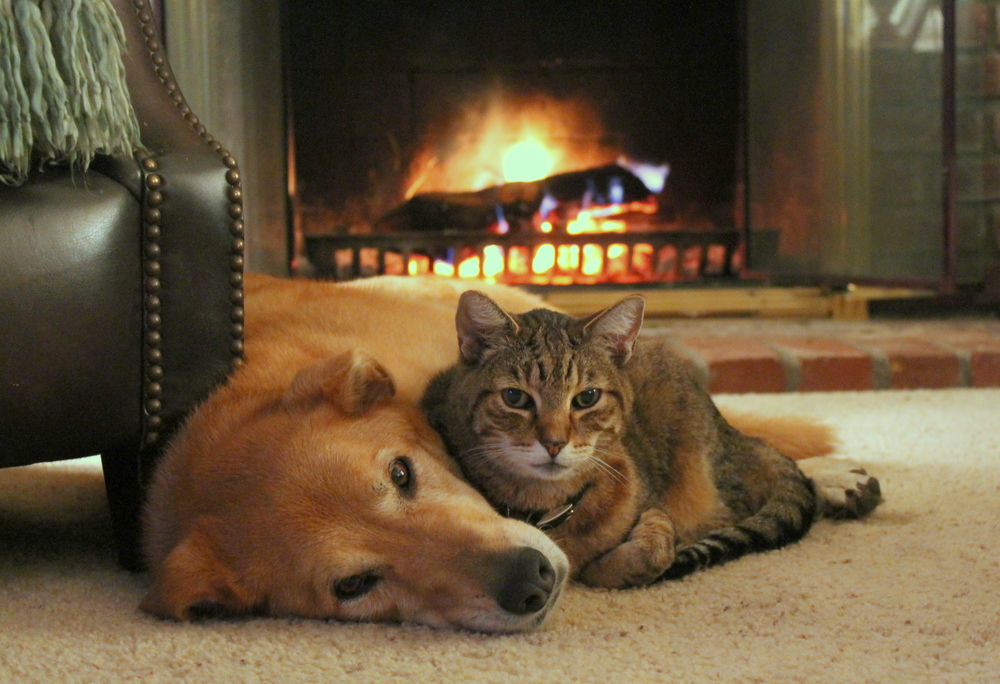 Cozy by the fire.