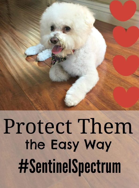 Year round protection for your dog