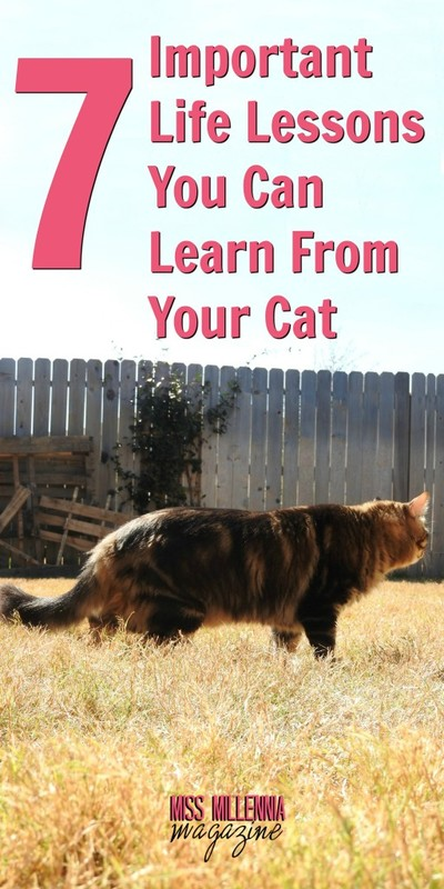 7 Important Life Lessons You Can Learn From Your Cat