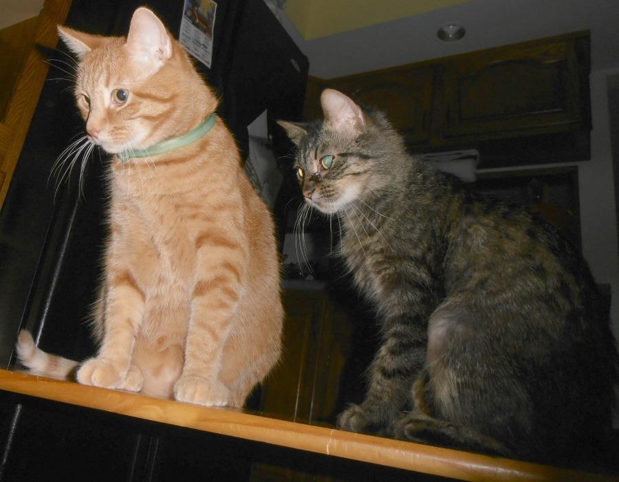 Curious cats crash our pajama party!