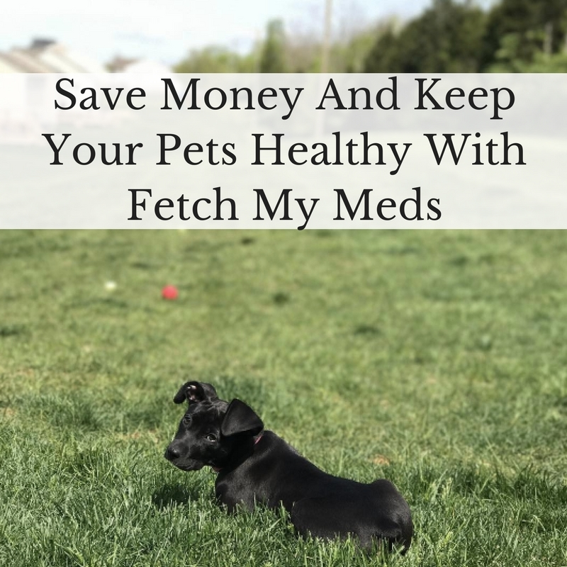 Save Money And Keep Your Pets Healthy With Fetch My Meds #FetchMyMeds