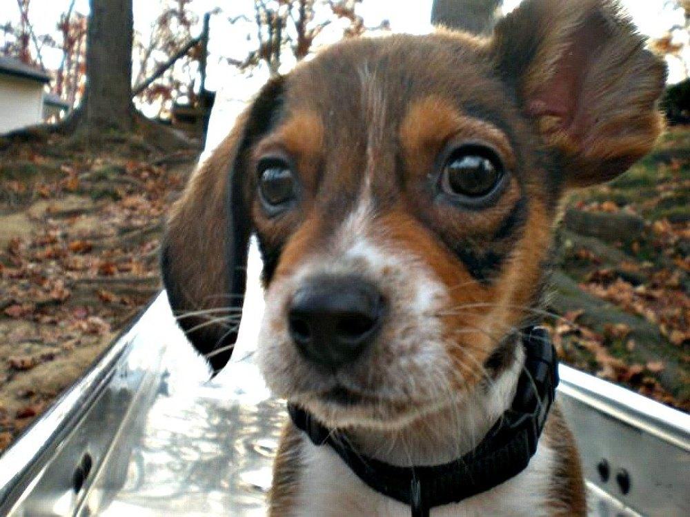 Vincent as a tiny pup